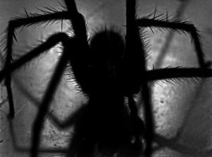 spider-452489_1280